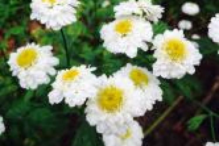 yellow-and-white-flowers-janice