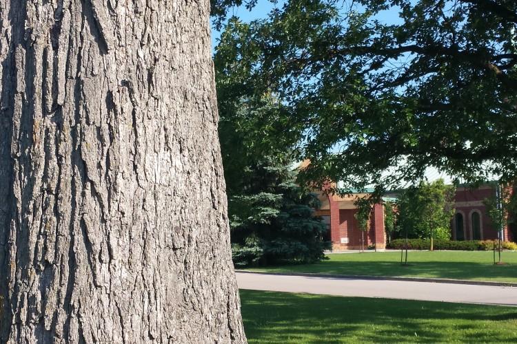 tree outside woodside church